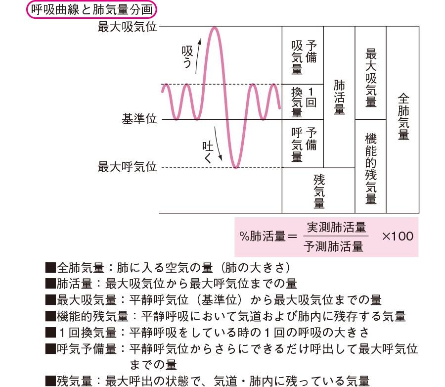 呼吸曲線・排気量分画と努力性肺活量