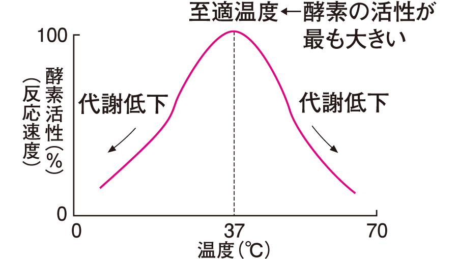 酵素触媒反応速度に及ぼす温度の効果
