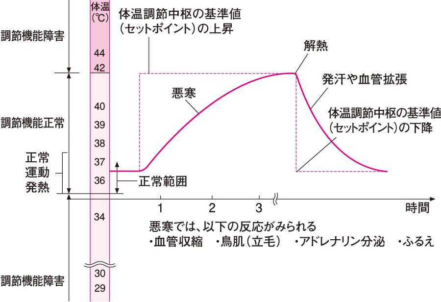 発熱と解熱の機序