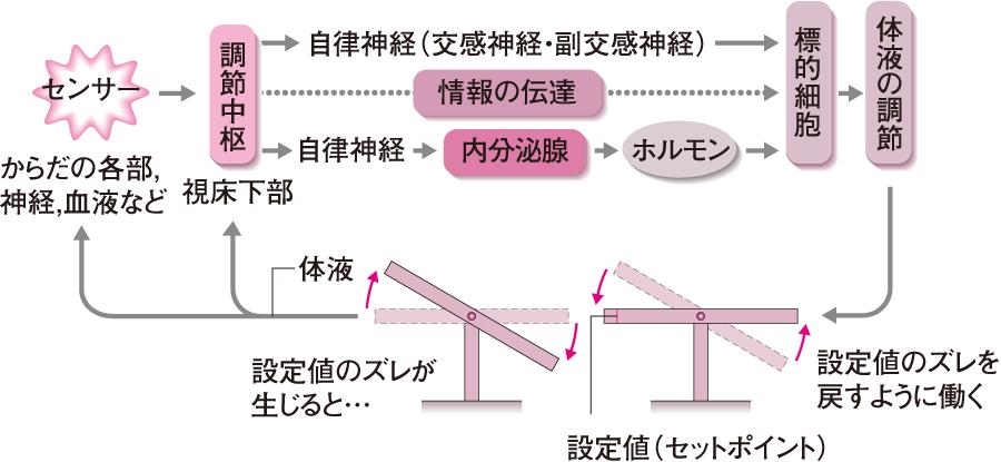 ホメオスタシスの概念図