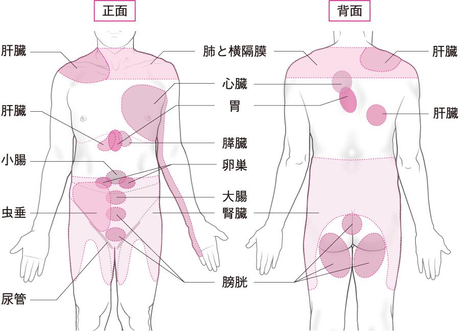 関連痛の部位