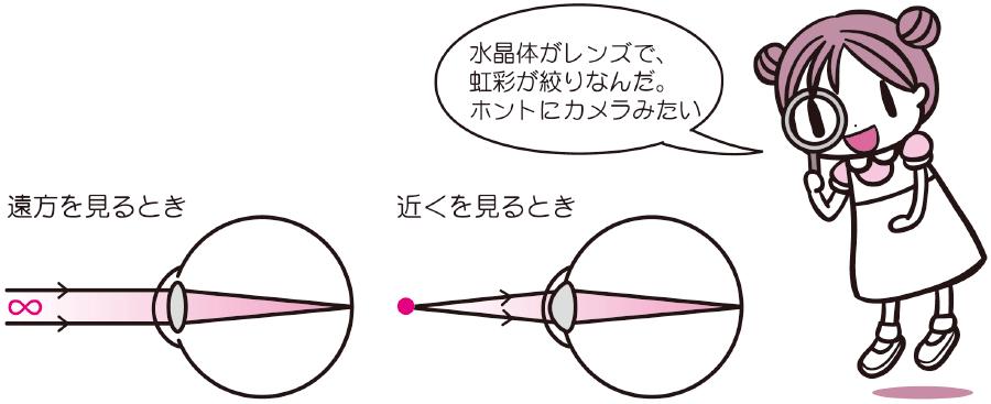 眼球とカメラの関係