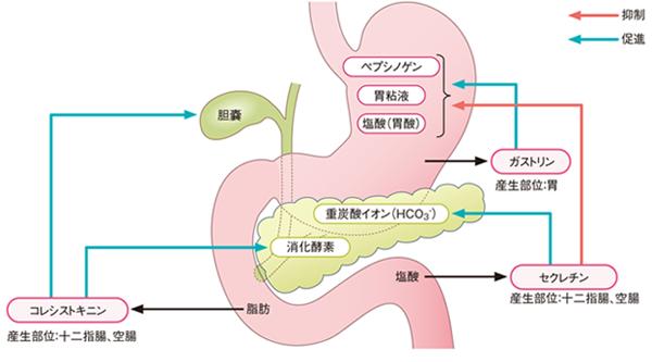 消化管ホルモン