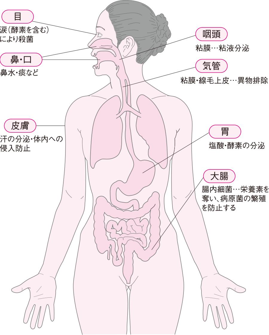 生体バリア