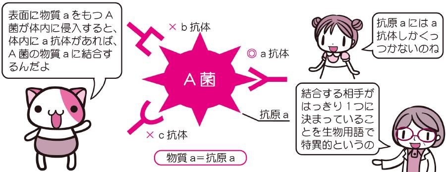 抗原と抗体