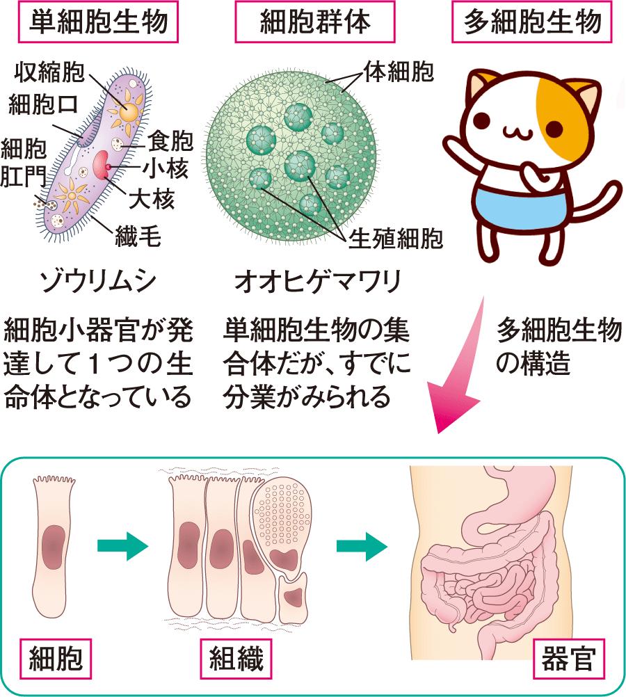 単細胞生物と多細胞生物