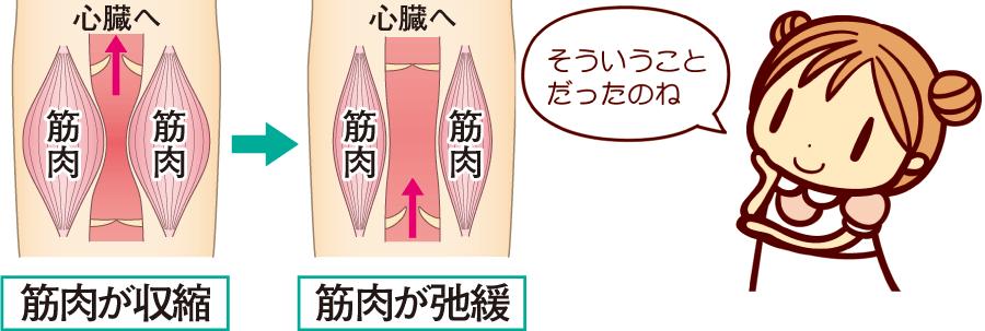 脚の筋肉ポンプ