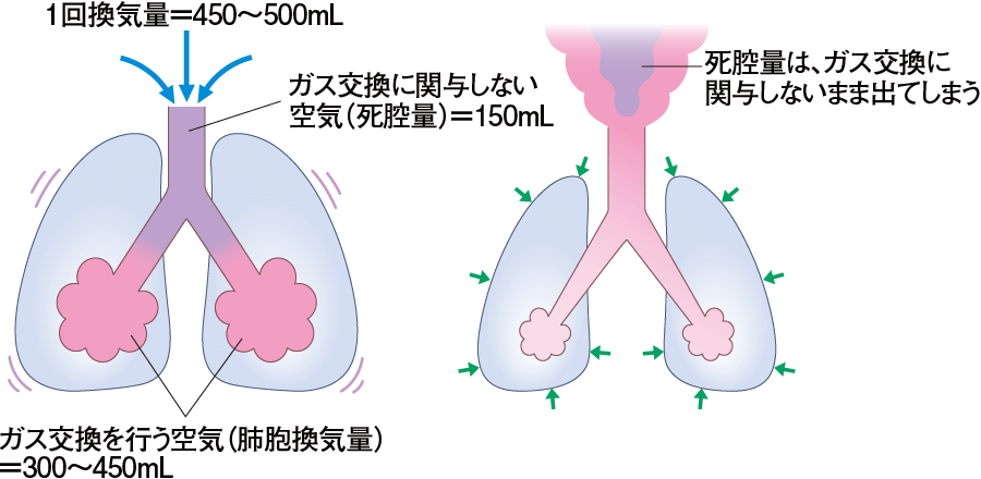死腔と肺胞換気量