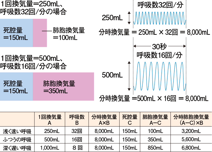 呼吸パターンによる分時換気量と分時肺胞換気量の違い