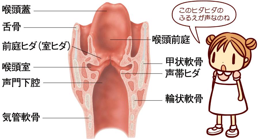 咽頭の構造