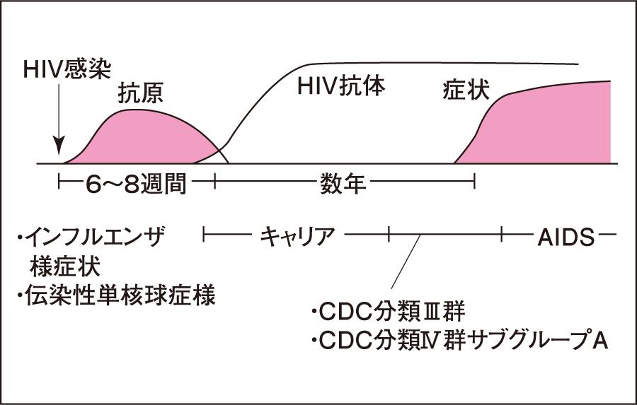 HIV感染における抗原抗体出現