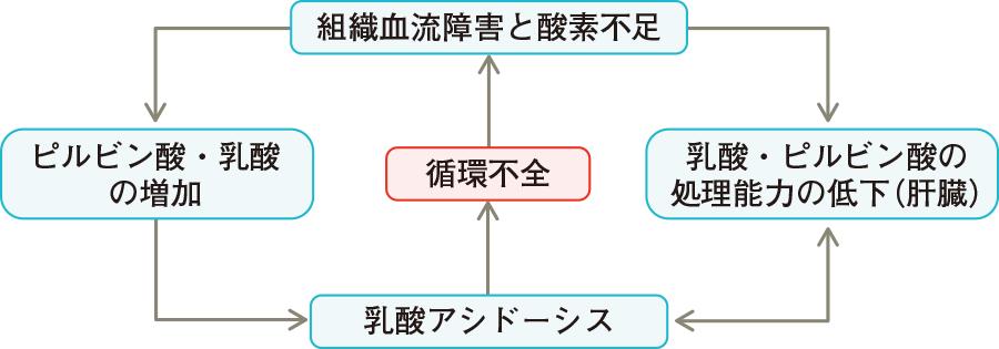 乳酸アシドーシスの循環