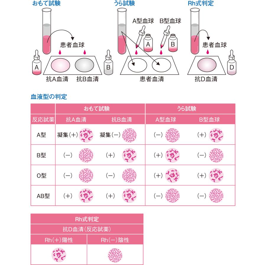 血液 型 検査 値段