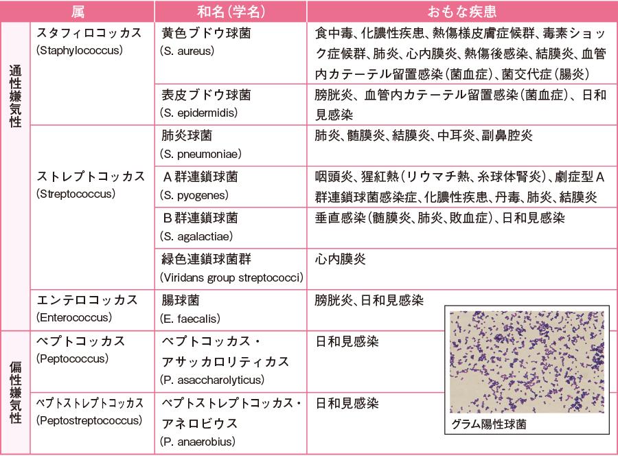 病原性を有するおもなグラム陽性球菌