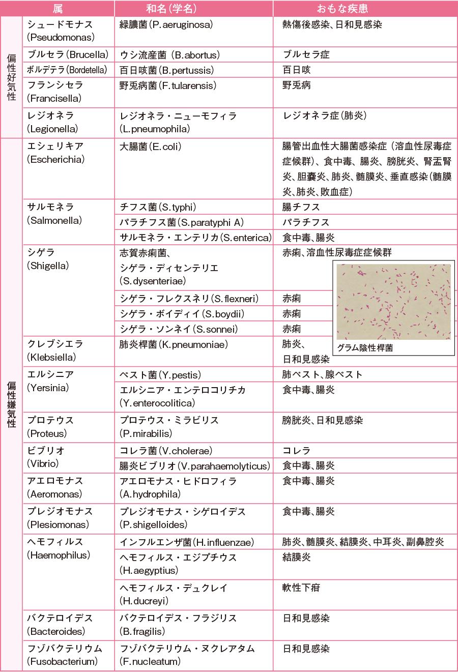 病原性を有するおもなグラム陰性桿菌