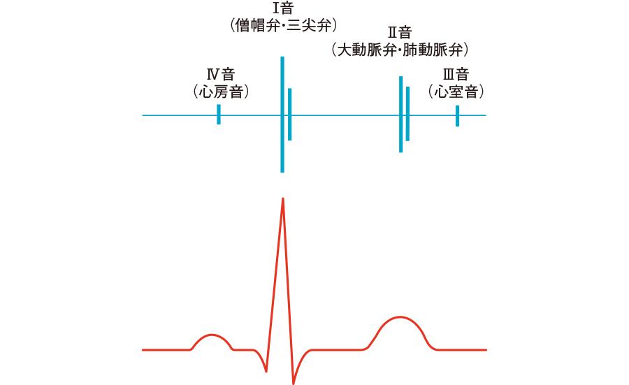 心音図・心電図の時間的関係