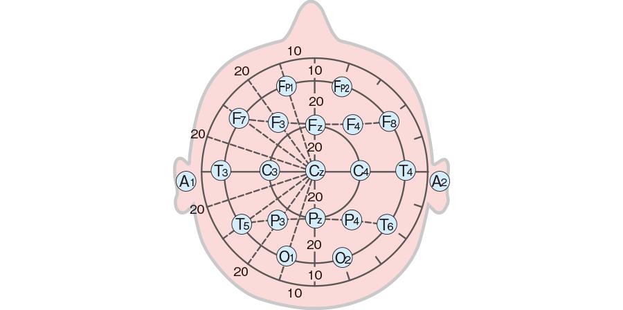 脳波の電極の部位(10/20 法)