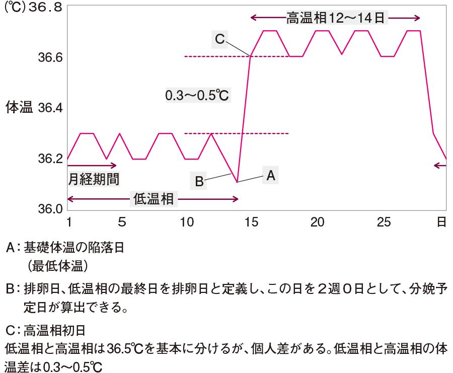成人女性の基礎体温(典型的2相性経過)