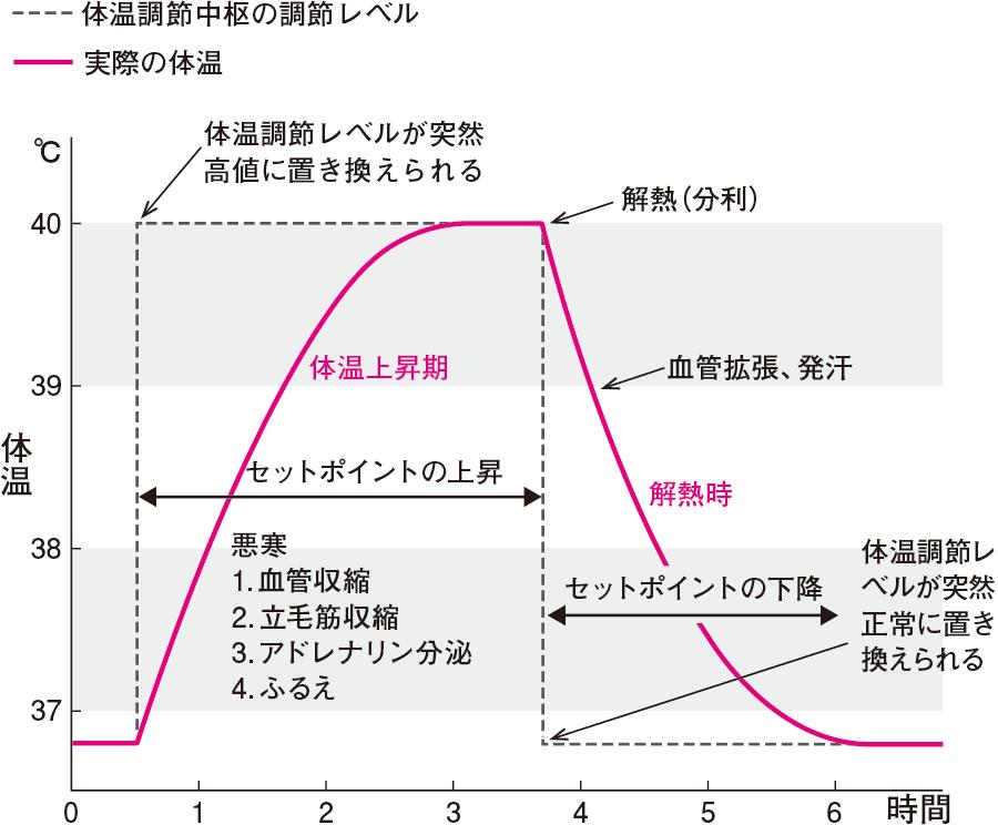 体温調節中枢の調節レベル切り替えと体温曲線