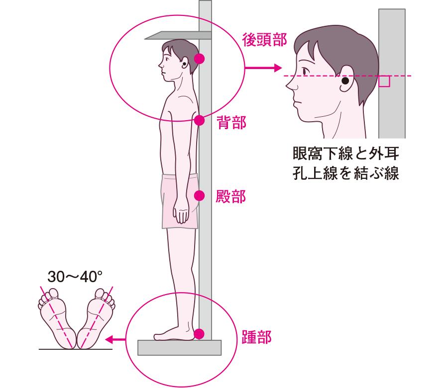 身長の測定