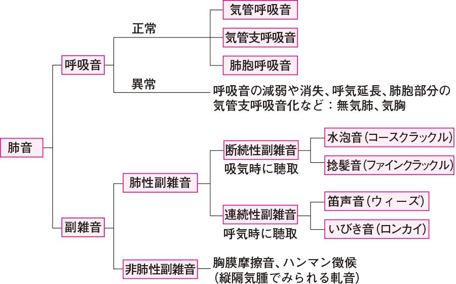 肺音の分類