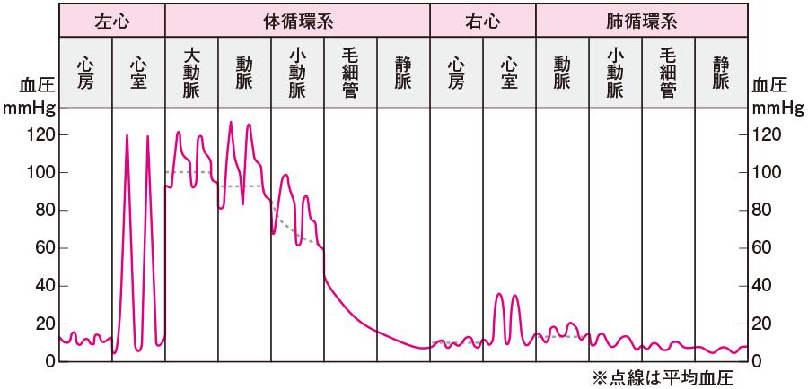 血管系各部位における血圧
