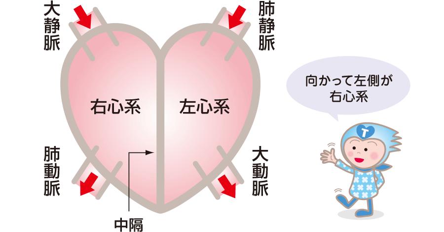 右心系と左心系
