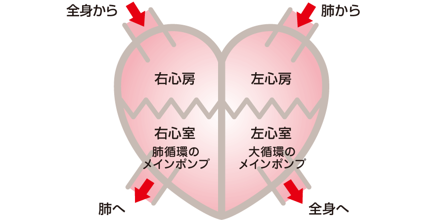 心臓の4つの部屋