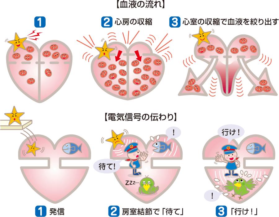 血液の流れと電気信号の伝わり