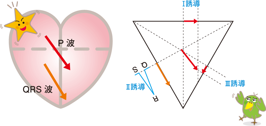 心房の興奮の伝導方向