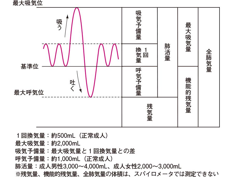 肺の換気容量(かんきようりょう)(スパイログラム)