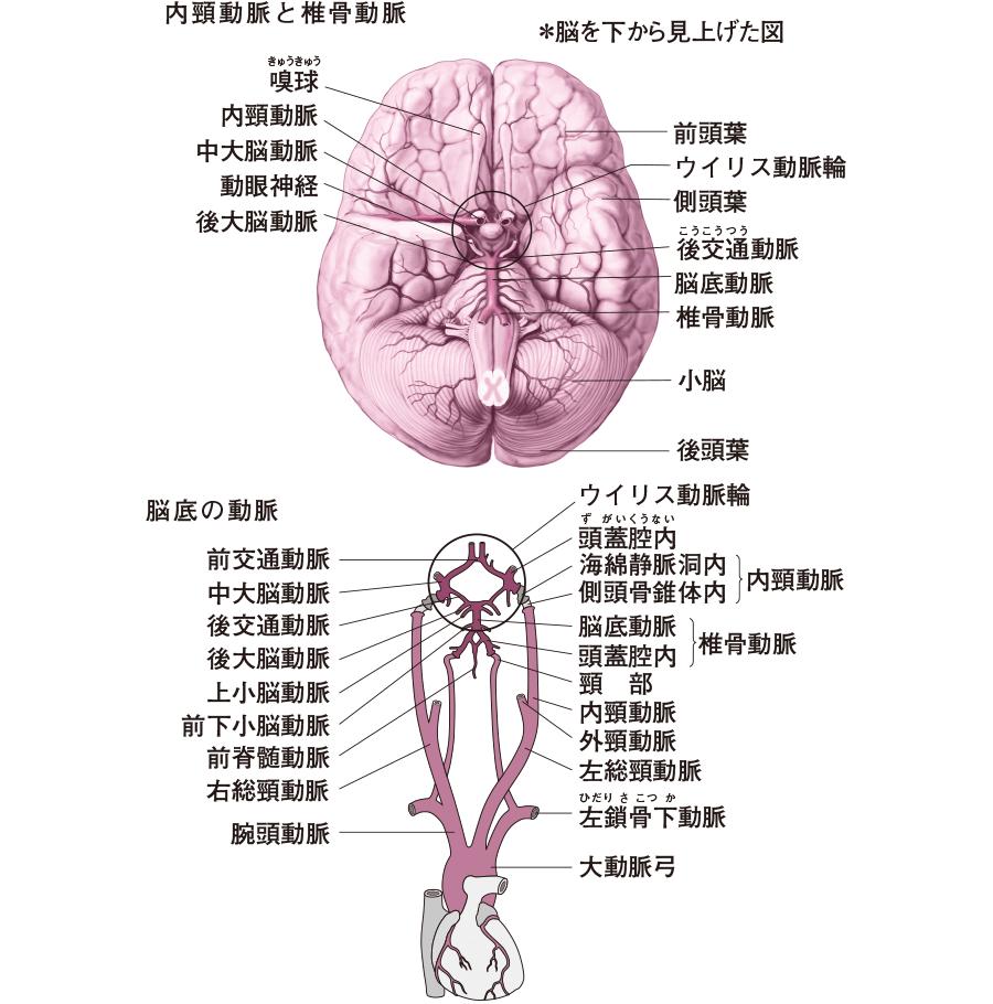 と は ウィリス 動脈 輪