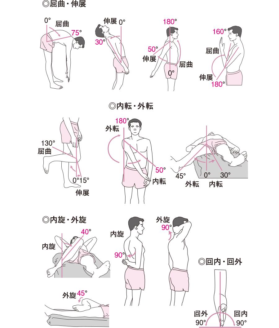 関節の動き