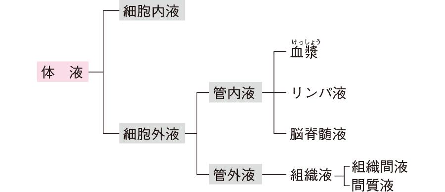 体液の分類