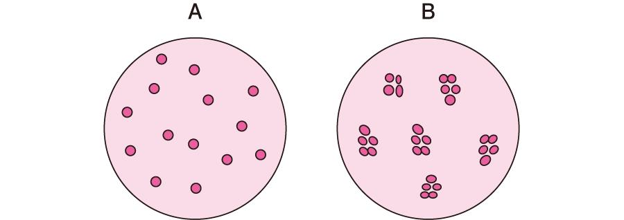 血液型(1)|血液と生体防御|看...