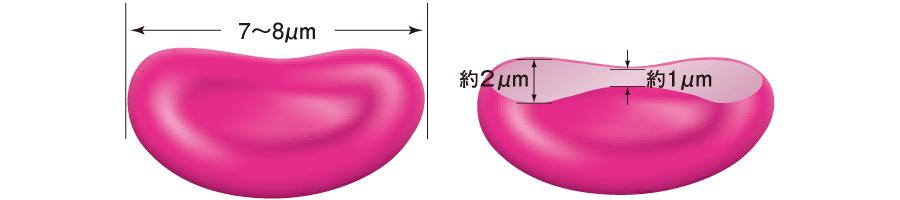 赤血球の形