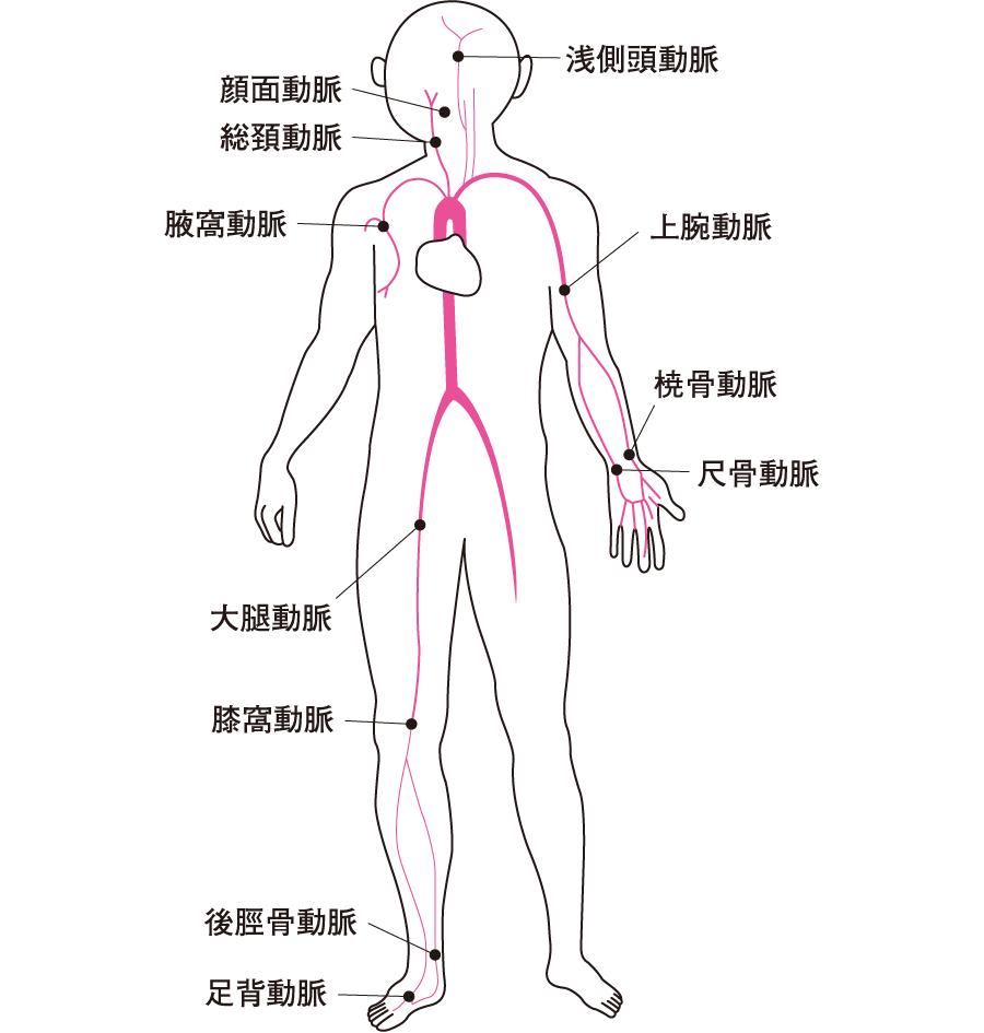 脈拍の触れる部分