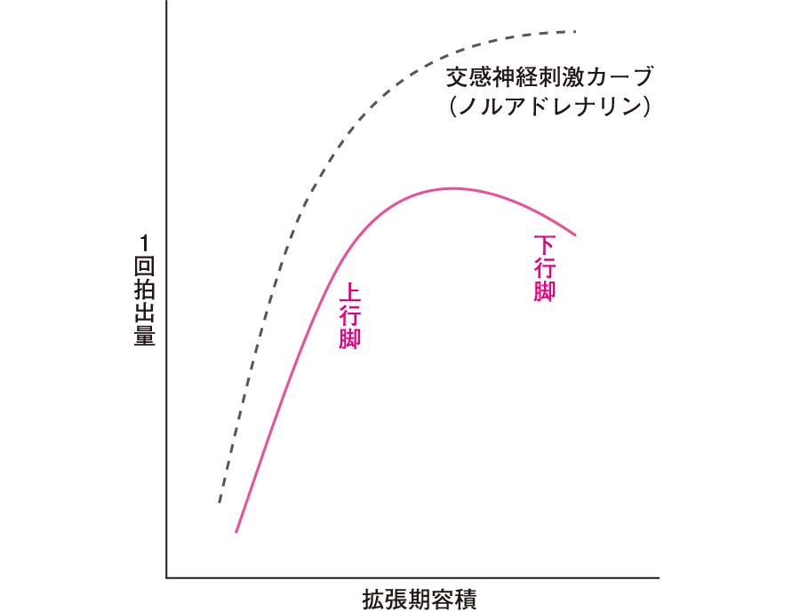 心臓の拡張期容積と1回拍出量の関係(スターリングの心臓の法則)