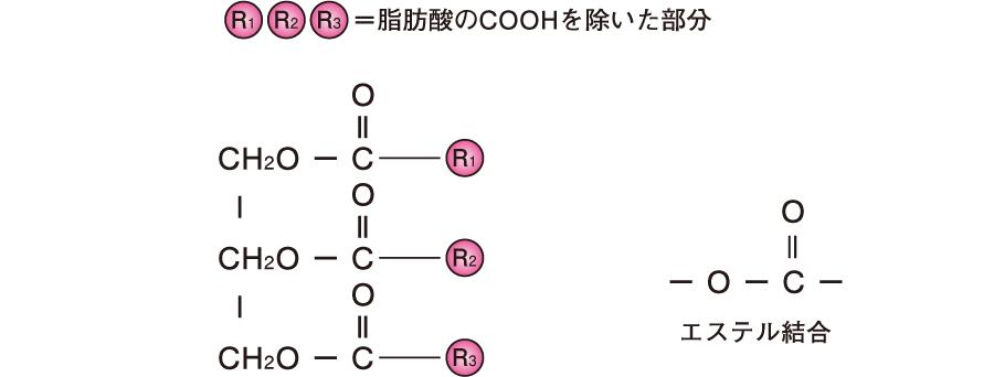 脂質の基本構造