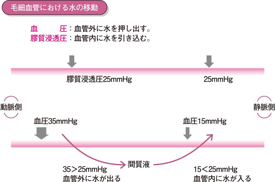 スターリングの仮説(超微細循環)
