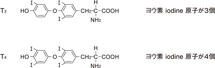 T<sub>4</sub>およびT<sub>4</sub>の化学構造