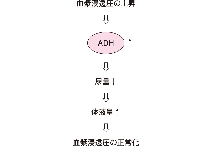 血漿浸透圧と尿崩症およびSIADHの関係
