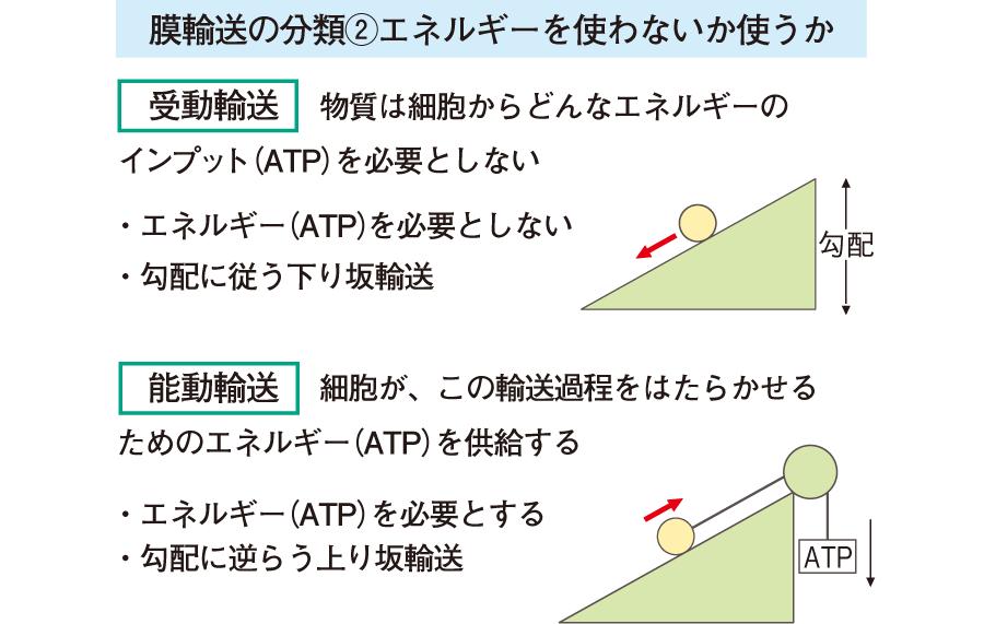 膜輸送の分類