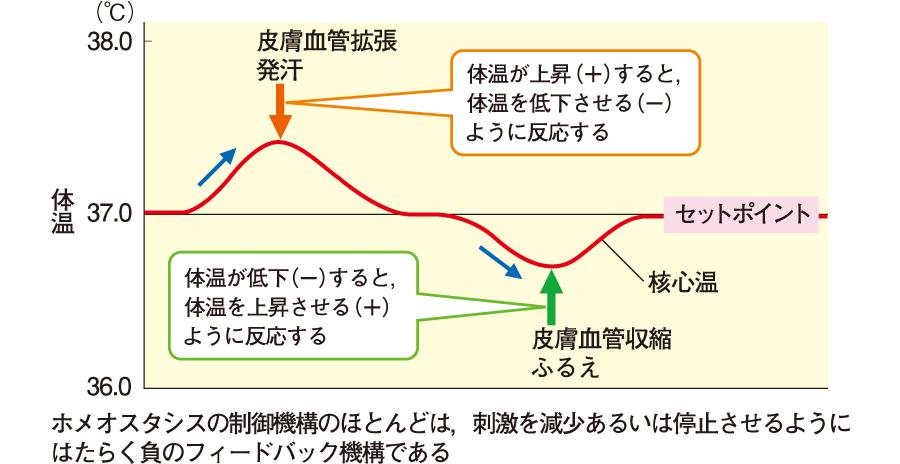 負のフィードバック機構の例