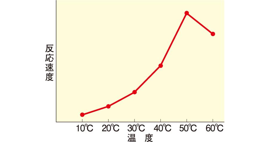 反応温度と酵素反応速度