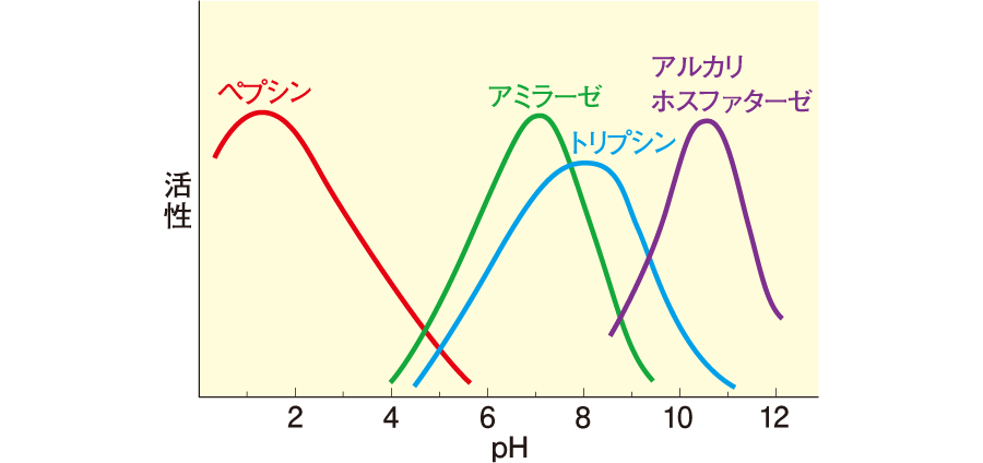 酵素の至適pH