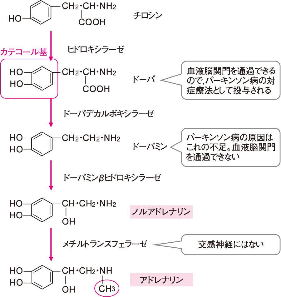 カテコールアミンの合成