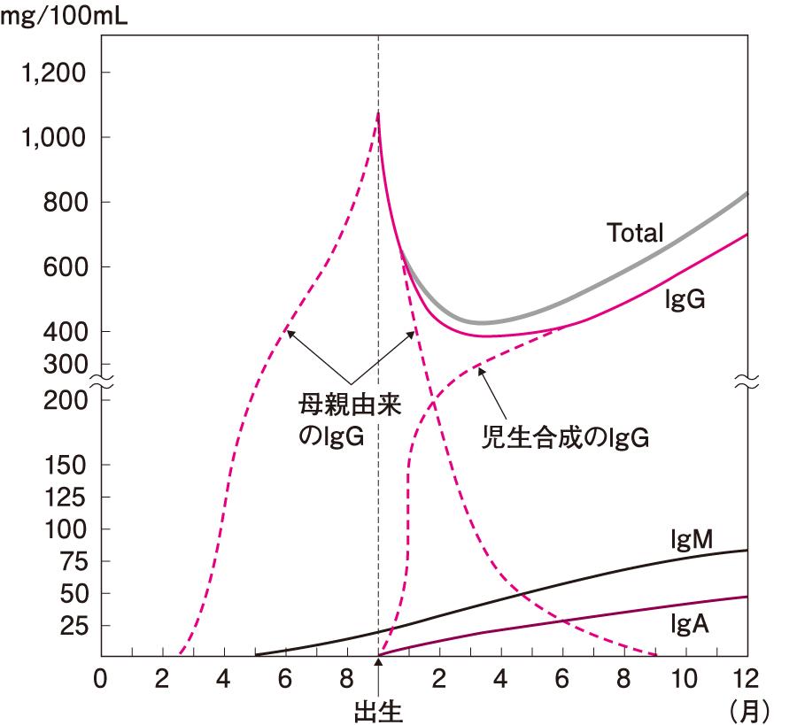 ヒトの胎児期および生後の抗体量の変化