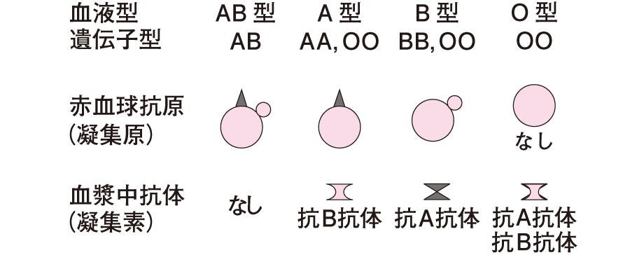 ABO式血液型