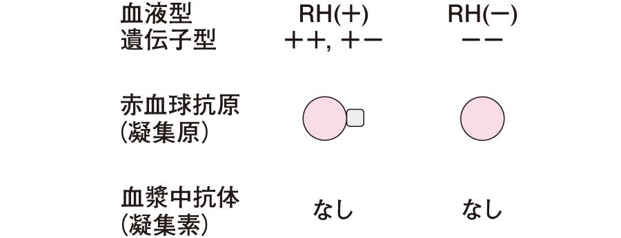 Rh式血液型